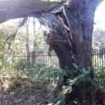 drzewo3